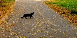 Как будто черная кошка пробежала